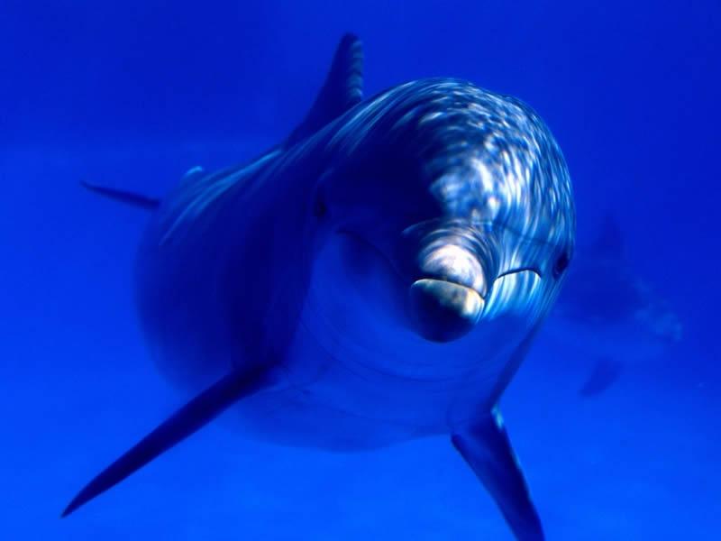 aquatic-curiosity-bottlenose-dolphin