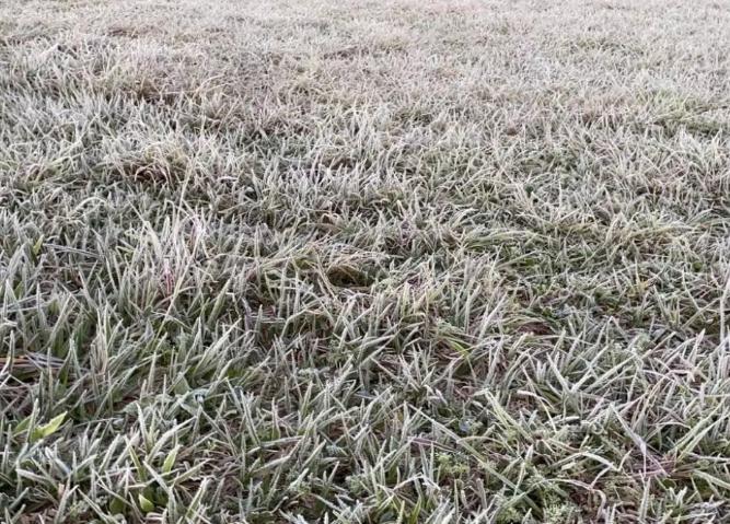 Frio provoca sensação térmica de -4ºC com geada em 12 cidades do Estado