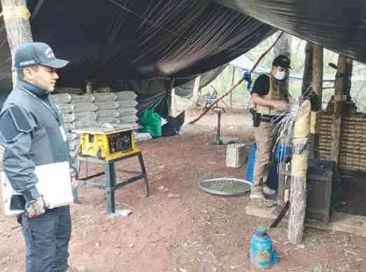Bella Vista – Troca de tiros em fazenda termina com apreensão de 3,5 toneladas de maconha
